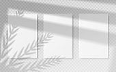 Posters with shadow overlay. White blank banners mockup with vector transparent shadow of tropical leaves and window frame