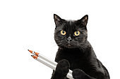 black cat, isolated on white background, holds several pencils in its paws