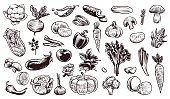 Vegetables sketch. Hand drawn various farming harvest food vintage collection, organic carrots and eggplant, cabbage and mushroom, pumpkin garlic and greens fresh eco vector isolated set
