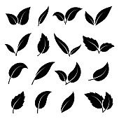 Leaf silhouette. Black leaves of trees and plants various elegance shapes, herbal tea leaf eco label, organic foliage emblems collection, decoration botanical vector isolated set