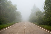 Asphalt road passing through the forest in the morning fog. Summer landscape.