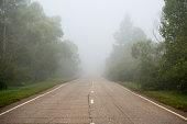 Asphalt road passing through the forest in the morning fog. Summer landscape.