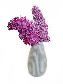 vase lilac branch isolated on white background