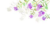 elegant crape myrtle frame, watercolor texture
