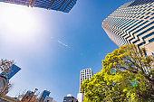 Urban fresh greenery and skyscrapers