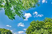 Fresh green tree and blue sky