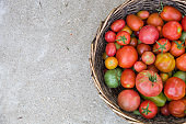 Harvest of fresh organic tomatoes. Top view on basket with colorful tomatoes on concrete background. Gardening concept. Healthy eating