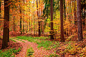 Forest full of golden and brown leaves in autumn, Poland