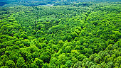 Aerial view of green forest in summer Poland, Europe