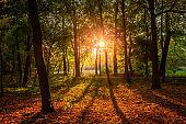 Amazing sun beam in the autumn forest at sunrise, Poland