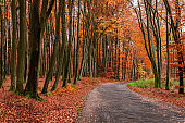 Amazing brown path and dark road in autumn forest, Poland