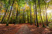 Sunbeam in the autumn forest at sunrise, Poland
