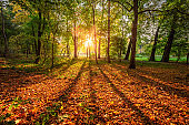 Stunning sunrise and sun beam in the autumn forest, Poland