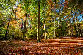 Sunrise in colorful autumn forest in Poland