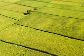 Agriculture aerial view from above. Ubud rice terraces, Indonesia, Asia. Abstract geometric texture of agricultural parcels in green color.