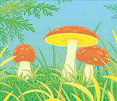 Mushrooms in thick grass on a forest glade