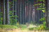 Nature forest landscape