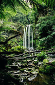 Hopetoun Falls amidst trees in a rain forest