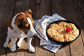 Fresh homemade bread in a metal baking dish. A small red flower decorates the buns. Dog breed Jack Russell Terrier sitting near a baking dish. Sunny day in the village