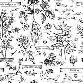 Seamless pattern with vintage hand drawn sketch medicine herbs elements isolated on white background. wormwood, turmeric, tansy, ashwagandha, shepherds, purse, ginseng. Vector illustration art.