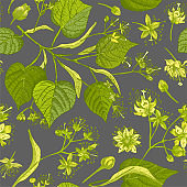 Linden blossom hand drawn seamless pattern with flower, lives and branch in yellow and green colors on gray background. Retro vintage graphic design Botanical sketch drawing