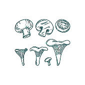 Chanterelle and champignon mushrooms in doodle style. Forest or farm mushrooms of different size. Vector illustration