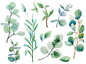 Watercolor floral eucalyptus leaf set. Hand drawn spring and summer decorative illustration.