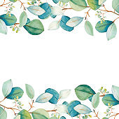 Watercolor floral eucalyptus leaf set. Hand drawn spring and summer decorative illustration.