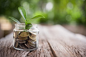 Plant growing in jar savings coins. business concept of saving and investment.