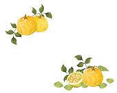 Watercolor citron fruits