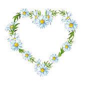 Heart daisy flowers