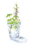 Fresh herbs in a glass jar