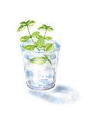 Fresh mint in a glass jar