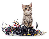 Kitten and a pile of gnawed wires.