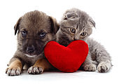 Kitten and puppy with a red heart.