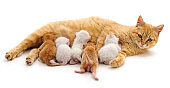 Cat with kittens.