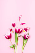 Fragile pink tulips