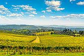 Chianti vineyard panorama and cypresses row. Castelnuovo Berardenga, Siena, Tuscany, Italy