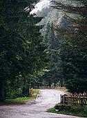 Windy road between pine trees