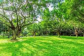 Blue sky, sunshine, grassland, green forest