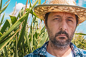 Portrait of serious agronomist in corn maize field