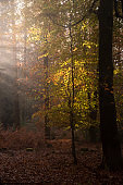 Beautiful Autumn Fall forest landscape image with vibrant colors and stunning morning light