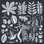 Autumn elements collection on chalkboard