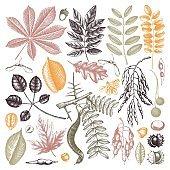 Autumn elements collection