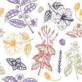 Herbal tea seamless pattern.