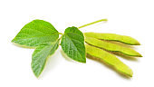 Green beans soybean.