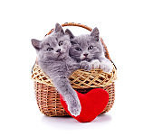 Kittens in the basket with a toy heart.