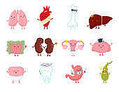 Medicine health human organs with smile in character hand drawn anatomy healthy vector illustration isolated on white.