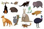 Australian animals, set of isolated cartoon characters kangaroo,
