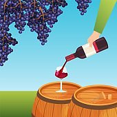 Hand pour young wine, bottle wineglass red grape poster flat vector illustration. Alcohol luxury material drink concept flyer.